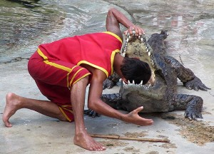 head between crocodile jaws